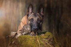 Heartwarming Photos of the Amazing Friendship Between a Dog and an Owl - My Modern Met