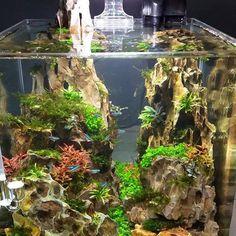 Bildergebnis für aquascape iwagumi