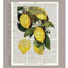 Lemon kitchen Decor - Beautiful Lemon Illustration Print on Vintage Dictionary Book page Kitchen decor, Botanical art, Artwork. Lemon Kitchen Decor, Vintage Kitchen Decor, Kitchen Artwork, Botanical Prints, Artwork Prints, Illustration, Graffiti, Drawings, Etsy