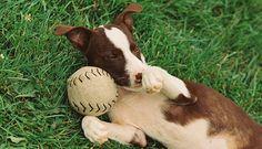 Jojotastic Guest Post: Pet Accessories from Shinola