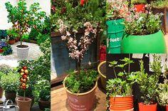 Balkon-Garten: Balkon mit Zwergobst bepflanzen