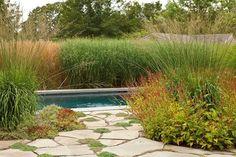 Ornamental Grass Landscape, Ornamental Grasses, Landscape Architecture, Landscape Design, Garden Design, Hampton Garden, Fence Plants, Pool Fence, The Hamptons