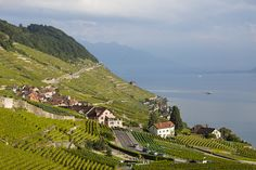 Travel Inspiration for Switzerland - Lavaux vineyards on Lake Geneva, Switzerland National Geographic Travel, Lake Geneva, Paris Skyline, Travel Inspiration, Geneva Switzerland, Mountains, Bucket, Pictures, Beautiful