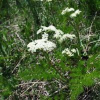 Nederlandse Eetbare Planten en Paddenstoelen Database