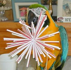 Homemade Parrot Toy - using straws