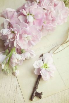 delicate little pink flowers Pretty Pastel, Beautiful Flowers, Shabby Chic, Rosa Pink, Old Keys, Pink Blossom, Tumblr, Key To My Heart, Love Photography