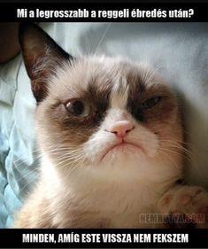 Funny Memes, Jokes, Grumpy Cat Humor, Funny Cats, Funny Pictures, Lol, Animals, Funny, Fanny Pics