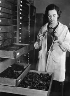Palaeontologist Hildegard Howard at the Natural History Museum of Los Angeles County, 1938. (NHM of LAC Copyright)