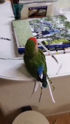 Check out the new Gucci Creative Director – Lustig Pinner – More Fun Funny Birds, Cute Birds, Cute Funny Animals, Cute Baby Animals, Funny Cute, Animals And Pets, Funny Animal Videos, Animal Memes, Funny Animal Pictures