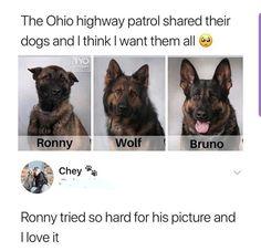 Animal Jokes, Funny Animal Memes, Funny Animal Pictures, Funny Dogs, Funny Memes, True Memes, Memes Humor, Funny Cartoons, Cute Dog Memes