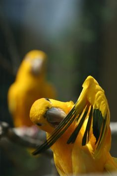 sir20:  Parrots by sir20
