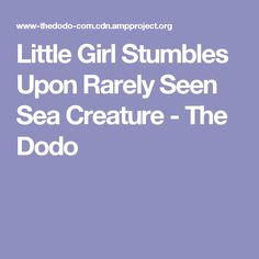 Little Girl Stumbles Upon Rarely Seen Sea Creature - The Dodo