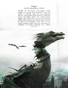 """You can't tame dragons, it's dangerous. You should see the burns Charlie's got off wild ones in Romania."""" -Ron Weasley."""
