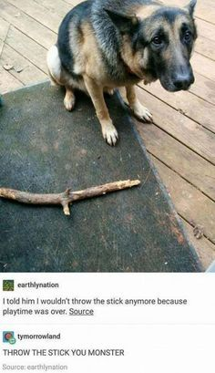 Funny Animals of The Day 20 Pics - AWW - - Here is todays 20 funny animals pictures enjoy; The post Funny Animals of The Day 20 Pics appeared first on Gag Dad. Funny Animal Pictures, Cute Funny Animals, Funny Cute, Funny Dogs, Funniest Pictures, Funny Photos, Hilarious, Funny Kittens, Animal Pics
