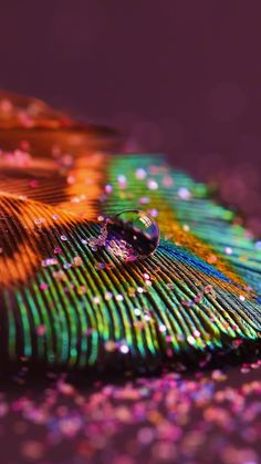 In 30+ stunning raindrop peacock feather works, we have already help you find more than 30 photos with those theme that you can use as inspiration.