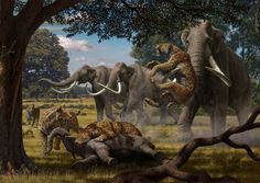 Mammoths And Saber-Toothed Cats  A pride of Smilodon fatalis, often called a saber-toothed cat, attacks a calf belonging to a herd of mammoths while the mother moves to protect her offspring.