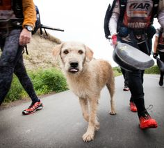 We loved this story about a stray dog who joined an adventure race team and ran his way right into a forever home!