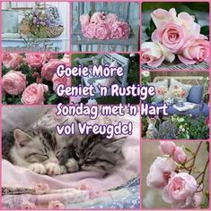 Lekker Dag, Goeie Nag, Goeie More, Quotes For Whatsapp, Afrikaans Quotes, Morning Blessings, Verses, Blessed, Greeting Cards