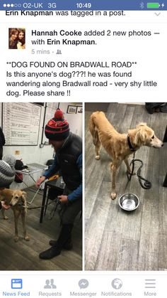 This lovely dog was found today, he was found alone wandering Bradwall Road, Sandbach, Cheshire. Please help find this dog's owners and get him back home.