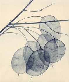 'Honesty II' by British artist & printmaker Angela Brookes. Etching, 45 x via Greenwich Printmakers Art And Illustration, Gravure Illustration, Illustrations, Collagraph, Cyanotype, Botanical Art, Art Studios, Printmaking, Art Drawings
