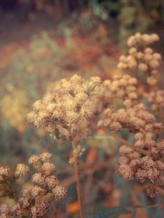Vintage Nature Photography Tumblr Background 1 HD Wallpapers