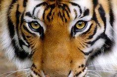 « Et si le tigre indien surpassait le dragon chinois? » par FRANÇOIS NORMAND
