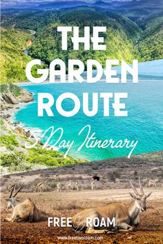 Our 5 Days Itinerary to the Garden Route, South Africa - Free Two Roam Africa Destinations, Travel Destinations, Travel Tips, Travel Guides, Holiday Destinations, Weekender, Places To Travel, Places To Visit, Travel Photographie