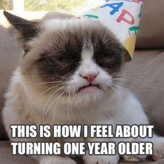 grumpy cat birthday | grumpy-cat-birthday.jpg
