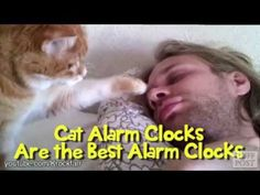 If you have a cat you won't need an alarm clock. Unfortunately, you can't choose the wake-up time.