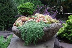 what do you know about hypertufa, concrete masonry, gardening, A pretty bowl filled with plant color and texture photo courtesy plantman56 blogspot com