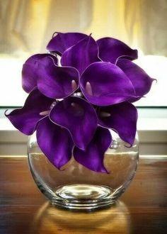 Gorgeous Dark Purple Lilies!