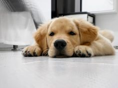 puppyy (: