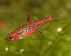 1000+ images about Keeping Fish: Nano Fresh on Pinterest ...