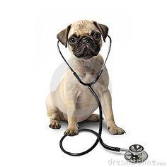 Perro del barro amasado y un estetoscopio