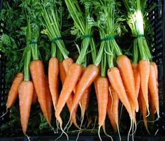 It's no wonder carrots are one of the healthiest foods you can eat. They're incredibly low in calories and fat, they can lower your cholesterol, and they're delicious! I'll munch on carrots whether they're raw or cooked, any day. Carrots have vitamin A, B6, C, and K, plus iron and fiber.