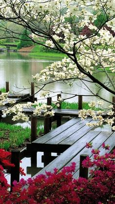 A beautiful lake with blooming trees and a nice deck to walk on~ Serenity
