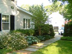 Possible planting style for in front of fence. Stuartia tree nice understory tree. Enough shade?