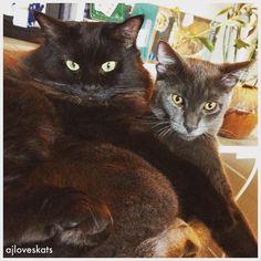 Hi, I'm AJ! I'm an animal lover & a proud Humom of five rescue cats in LA: Jango, Firenze, Arwen, Frodo, Galadriel  #adoptdontshop #SaveThemAll