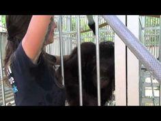 Spotlight on our orangutan rescue work in Borneo