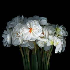 THE DISPLAY… Narcissus by Magda Indigo on 500px