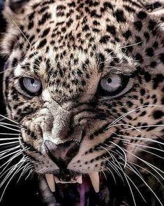 Cat Anatomy, Leopard Cub, Cat Whisperer, F2 Savannah Cat, Jungle Cat, Small Cat, African Animals, Leopards, Pretty Cats