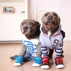Look at you in your sports outfits! GO TEAM!   These Pit Bull Brothers Are Taking Over Instagram