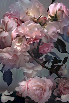 Nick Knight - Roses, 2008
