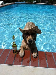 chien-piscine