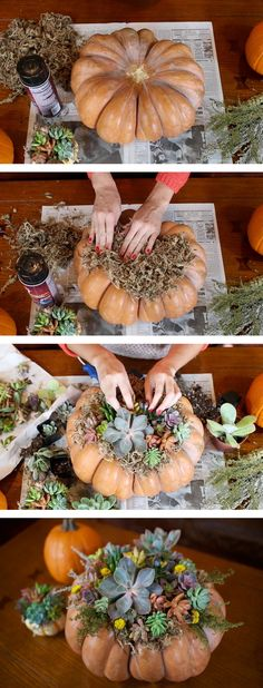 Buy Flowers Online Same Day Delivery A Gorgeous Thanksgiving Centerpiece Diy Craft Project Diy Succulent Topped Pumpkin Believe It Or Not You Can Actually Hot Glue The Succulents To The Moss And It Wont Damage Them In Any Way. Succulent Centerpieces, Pumpkin Centerpieces, Diy Centerpieces, Pumpkin Vase, Centrepieces, Diy Craft Projects, Diy Crafts, Fall Projects, Thanksgiving Diy