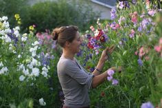 Growing Great Sweet Peas - Tips for a Great Harvest from Floret Flowers #sweetpeas