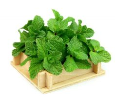 5 Crafty Uses for the Mint from Your Garden