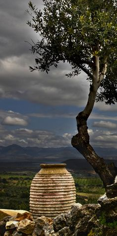 A Jar & Olive Tree. what a beautiful picture