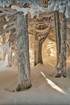 the trees in the silver forest!