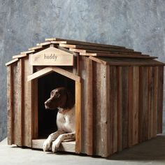 Williams Sonoma is going to the dogs and we love it!